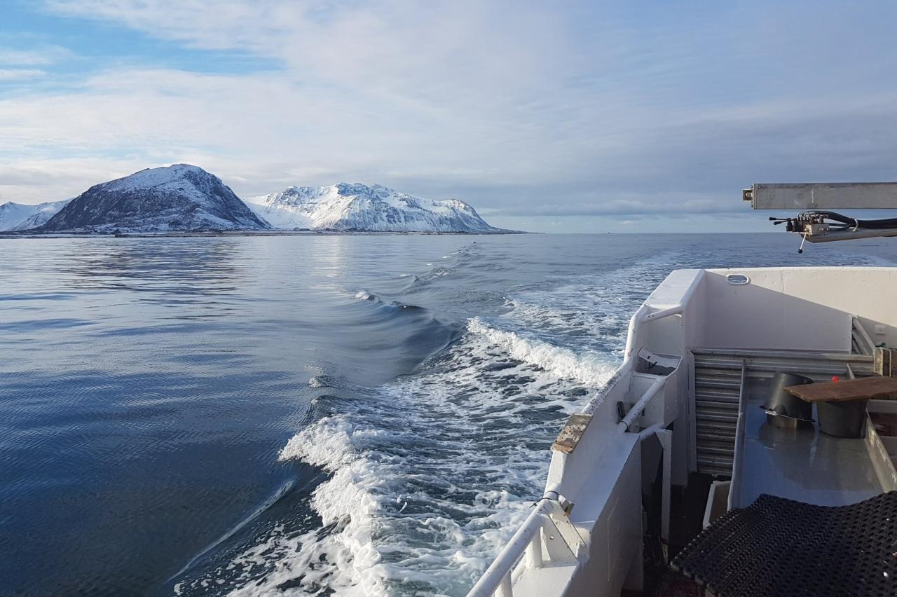 Innspill på havforvaltning