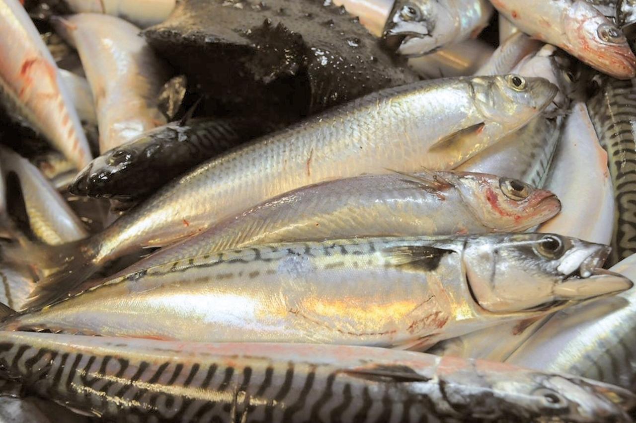 Makrellavtale klar