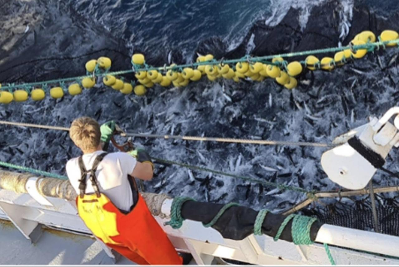 Ytterligere makrelljustering